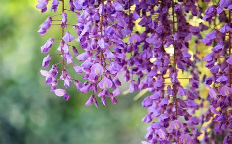 linguaggio fiori amicizia fiori dell amicizia significato fiori