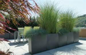 winterpflanzen für den garten chestha terrasse idee lounge