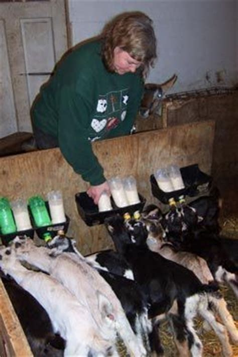 Carrigbryne Farmhouse Cheese Ae Heard Of Blue Cheese Well This Oneaes Green by 118 Best Images About Sheep Shelters On