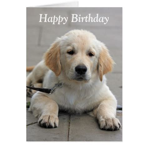 golden retriever birthday cards golden retriever puppy photo birthday card zazzle