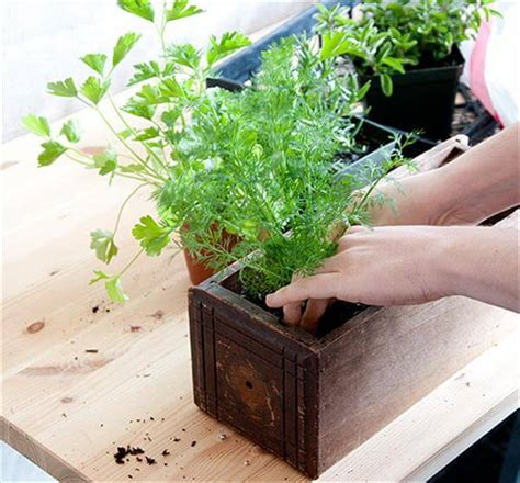 diy herb garden diy herb garden for interior use diy and crafts