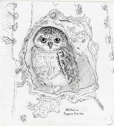 elf owl coloring page image gallery owl cactus drawing