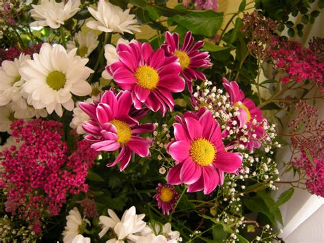 imagenes de flores naturales bonitas image gallery imagenes de flores naturales