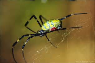 colorful spider photo