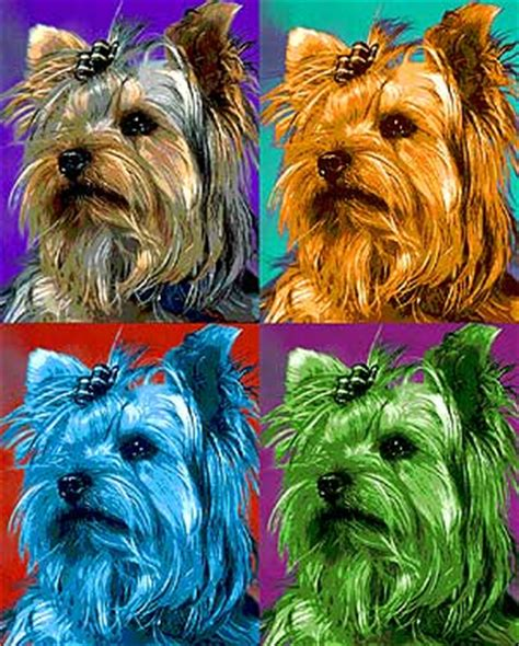yorkie poo cost price yorkie poo and yorkie poo pictures