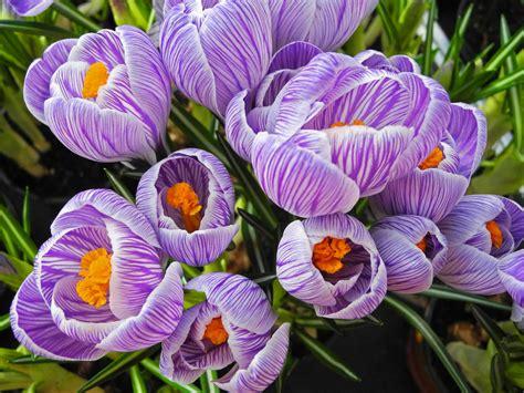 fiori stagione sfondi fiori natura giardino stagione primavera