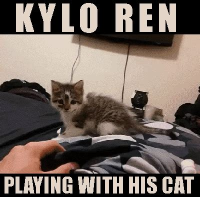 Star Wars Cat Meme - kiwi vs robot maze and coloring for grown ups and cat