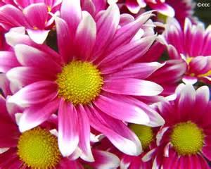 pictures of flowers images virgok bloem flower photos