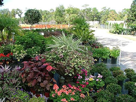 focal point landscaping focal point landscape nursery and supplies in geneva fl