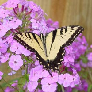 imágenes de mariposa s im 225 genes de mariposas delyn22 s blog