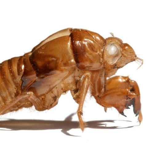 insetti nel materasso come uccidere le cimici letto 6 passi uncome