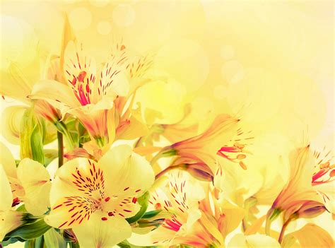 flowers background yellow flower wallpaper 2 widescreen wallpaper