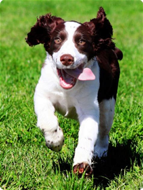 healthy dogs healthydog pet insurance reviews