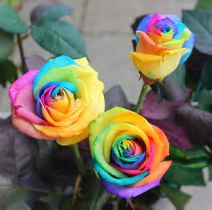 rainbow colored roses flower homes rainbow roses