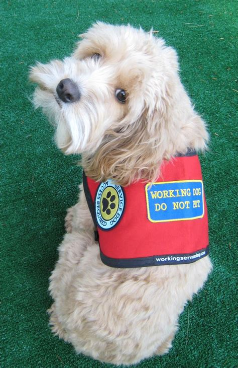 service vest for dogs medium sized dogs service vest official vest for your small