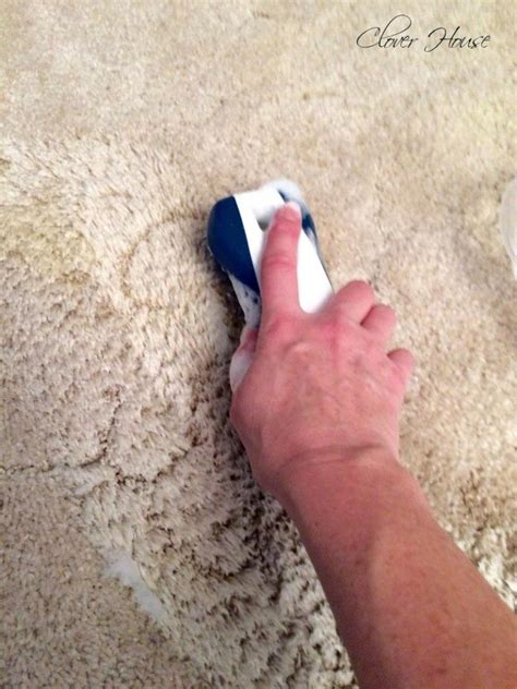 remove pet stains from carpet for by this