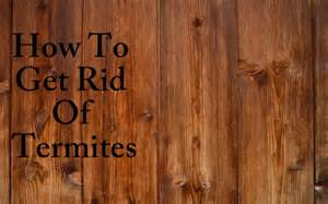 Essential Oils For Garden Pests - home remedies to get rid of termites