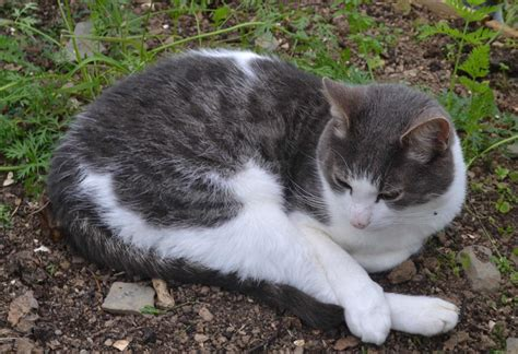 How To Stop A Cat From Pooping On The Floor by How To Stop Cats Pooping In The Gardengreenside Up
