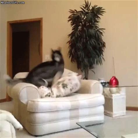 sofa liegen himself comfortable hilariousgifs