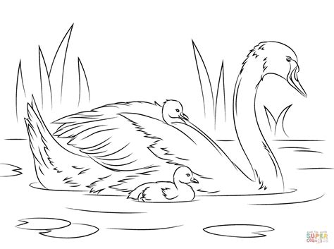 mute swan with chicks coloring page free printable