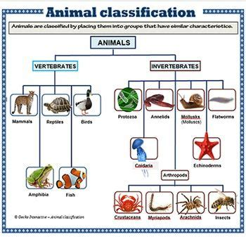 printable animal classification chart best 25 information poster ideas on pinterest