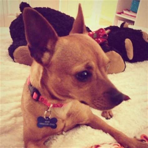 seattle humane society dogs seattle humane society animal shelters bellevue wa yelp