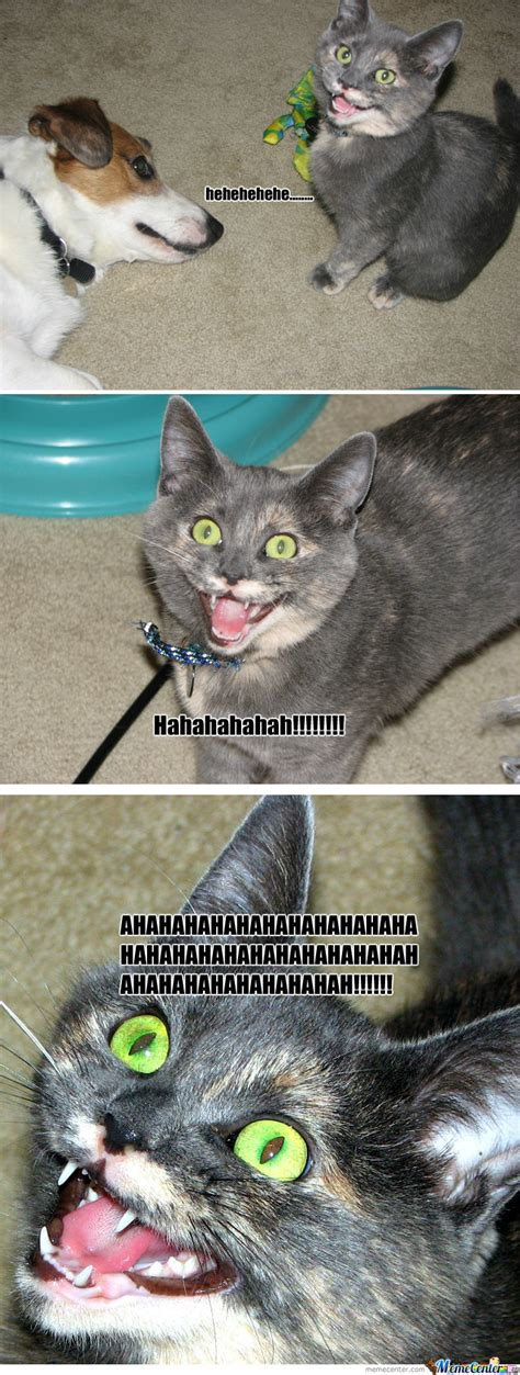 Laughing Cat Meme - introducing refurb the laughing cat by darthvirilus