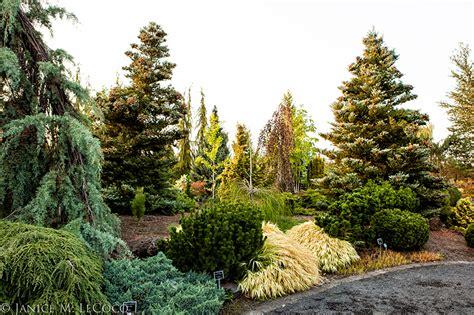Garden Answer Oregon 187 Conifer Days At The Oregon Garden