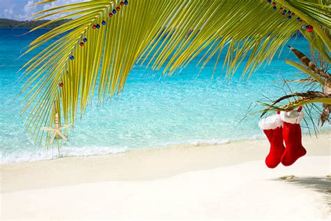 royalty free tropical christmas pictures images and stock