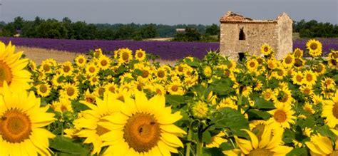 in provenza itinerari in provenza provenza