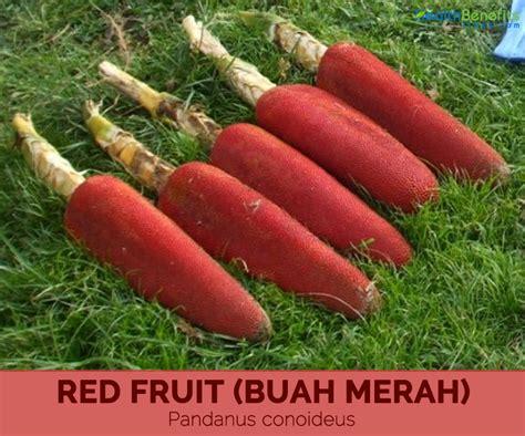 Calories In Root Vegetables - health benefits of red fruit buah merah hb times
