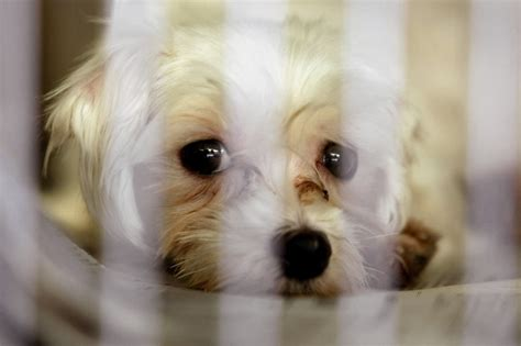pet stores that sell puppies in ct orland park overrides puppy mill ban chicago tribune