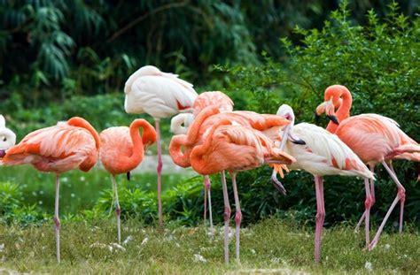 menunggu peresmian taman burung di gembira loka serta kehadiran 12 penguin dan 12 flamingo