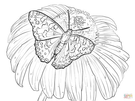 coloring page of painted lady butterfly painted lady butterfly sits on a flower coloring page
