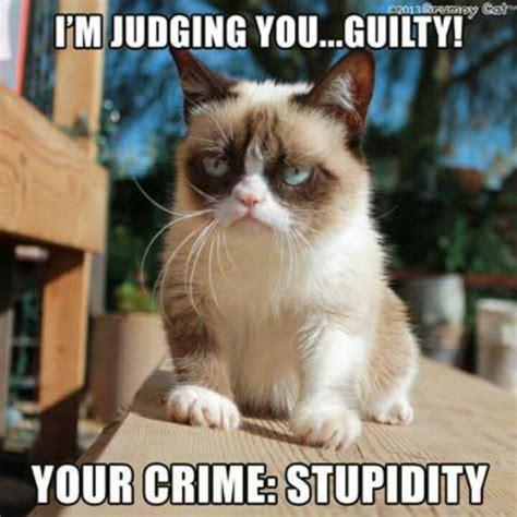 Sarcastic Cat Meme - grumpy cat says guilty yeah pinterest cats the o