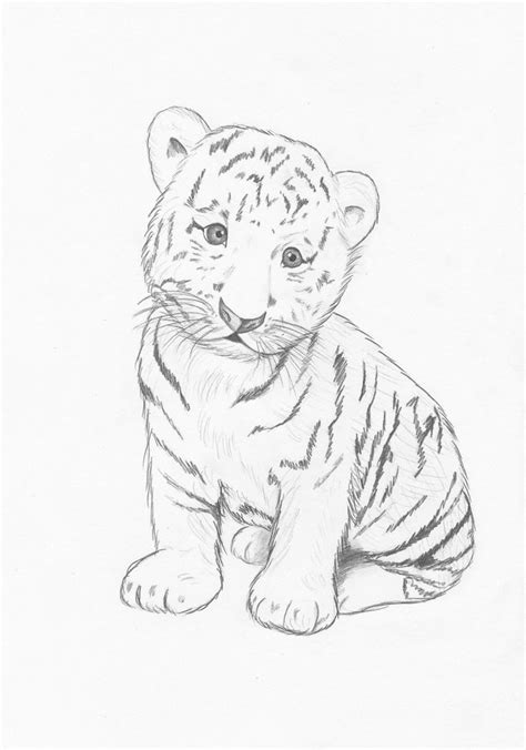top 25 ideas about tiger on white photos baby white tiger drawing drawing gallery