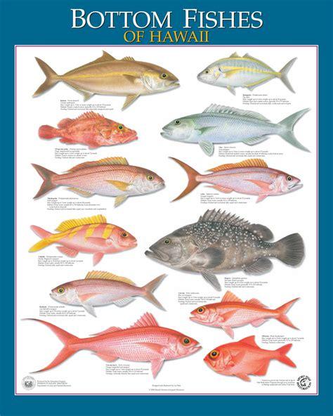 hawaiian fishing boat names hawaii marlin fishing hawaiian species all