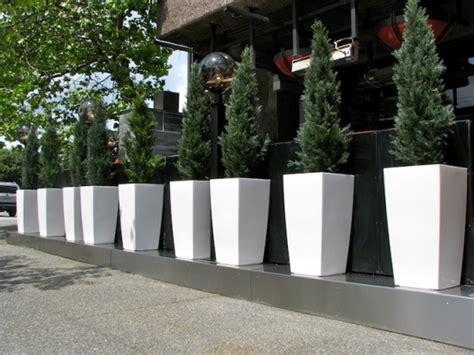 restaurant patio planters moxies restaurant cedar privacy screen greenscape