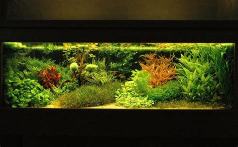 best substrate for aquascaping 16 best dutch aquascape images on pinterest aquarium