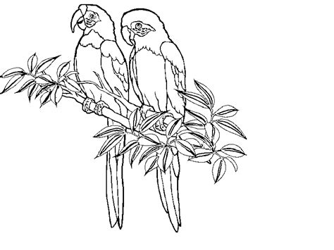 rainforest animals coloring page coloring home