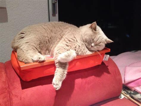 ab wann werden katzen rollig katzenk 246 rbchen werden echt 252 berbewertet katzen