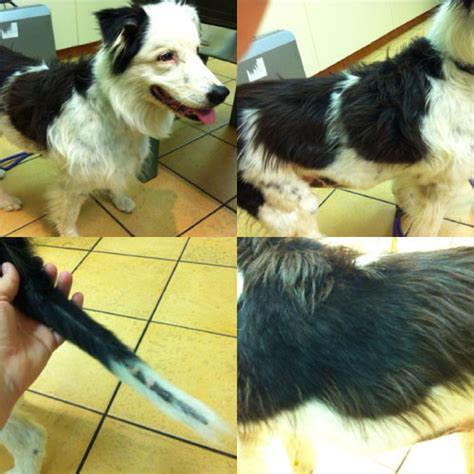 cushings disease in dogs cape animal centre cushing s disease in dogs