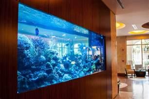 home design big fish images of fish luxury aquarium trendy mods com