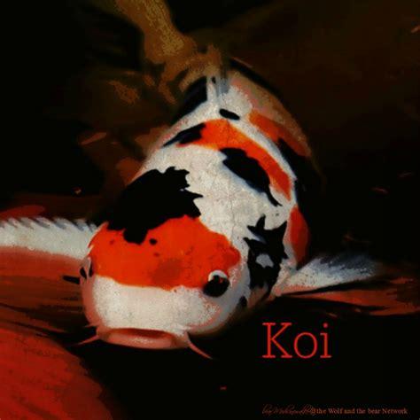 January 20, 2016 Totem Card of the Day ? Koi ? bear Medicinewalker