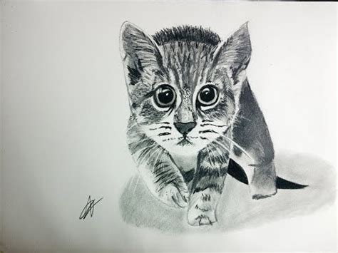 dibujos muy realistas c 243 mo dibujar un gato en blanco y negro