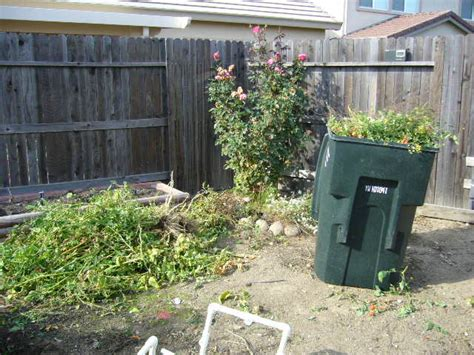 Sacramento Vegetable Gardening Winter Means It S Time To Sacramento Vegetable Gardening