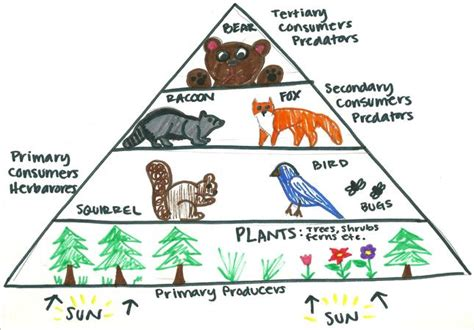 trophic pyramid energy food biomass pyramid food web