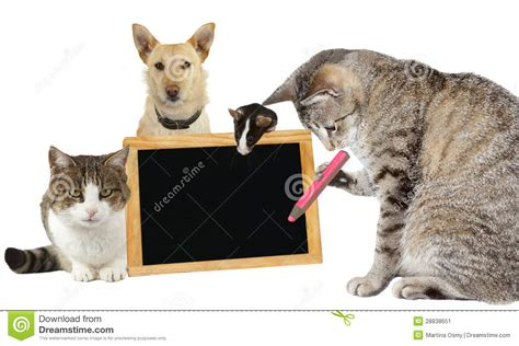 Cat Essay Writer by Cat Writing On A Blank Blackboard Stock Image Image 28838651