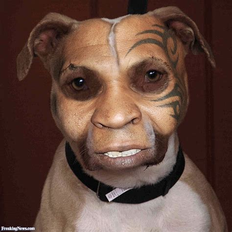 mike s dogs mike tyson s pictures freaking news
