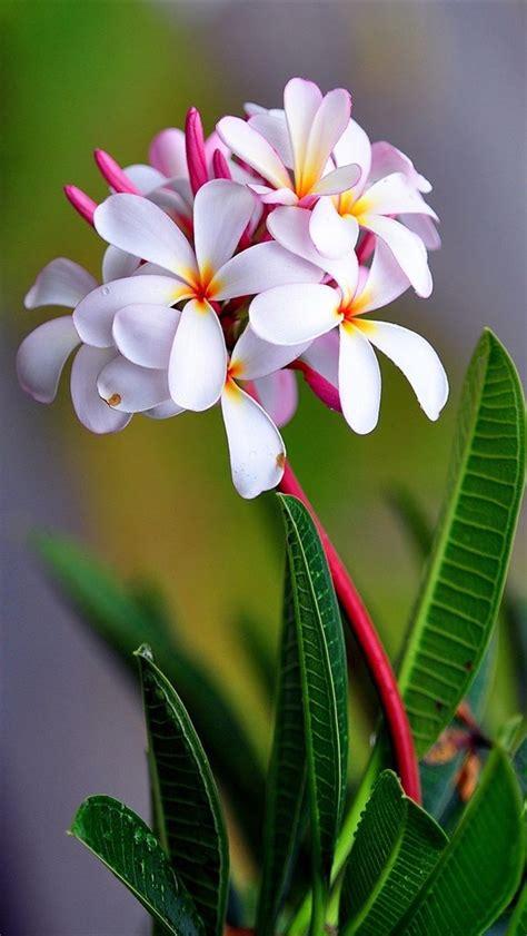 imagenes flores pinterest las 25 mejores ideas sobre hermosas flores en pinterest